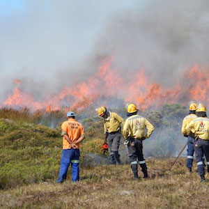 Wild‎fire next to the Nuwejaars Wetland SMA