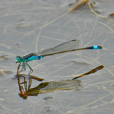 The 60 million year old tale: Our Nuwejaars dragonfly pursuit